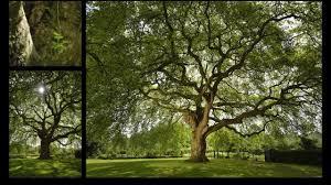 arbreaigle